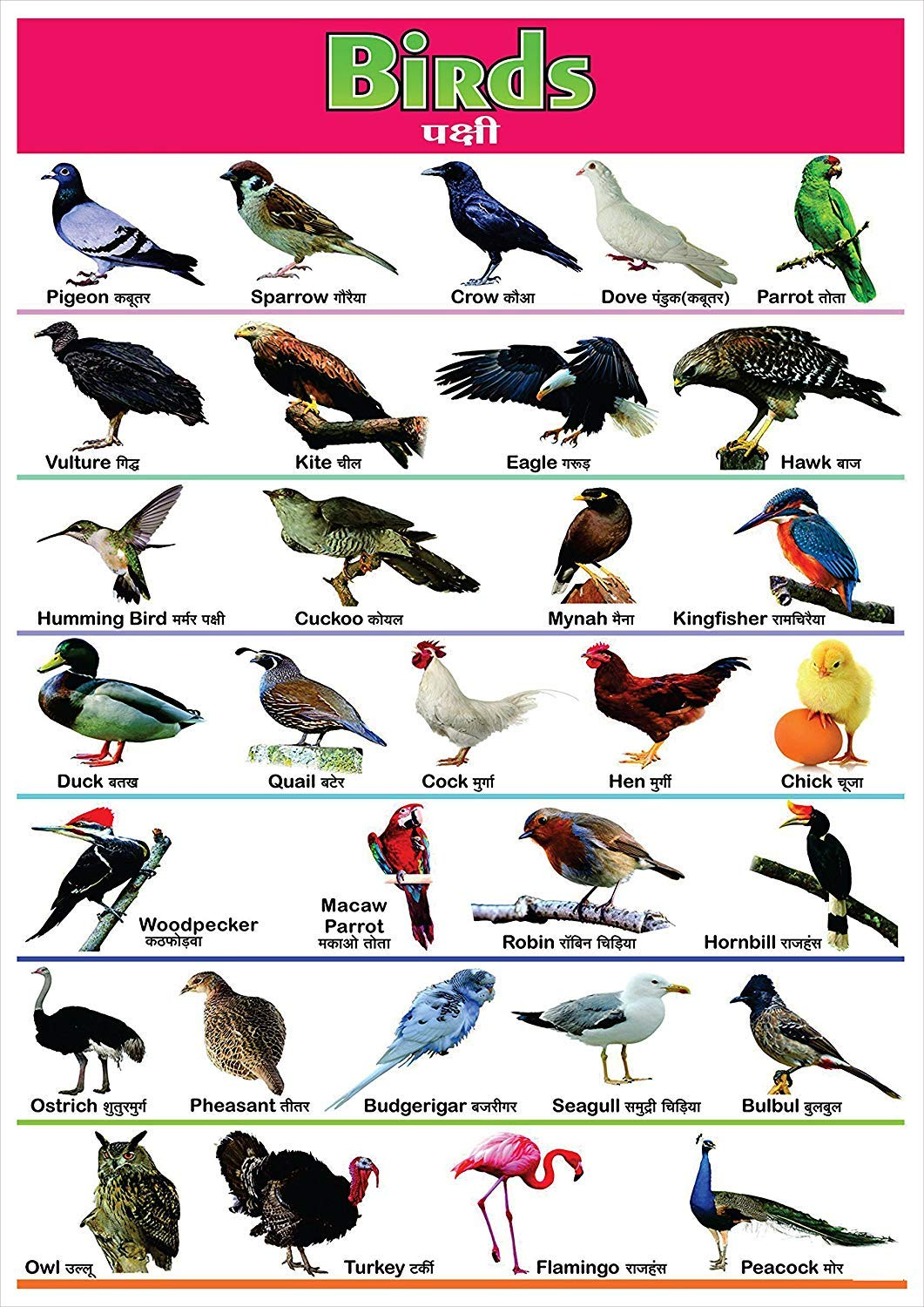 Birds Name For Kids In English And Hindi With Pictures पक ष य क न म