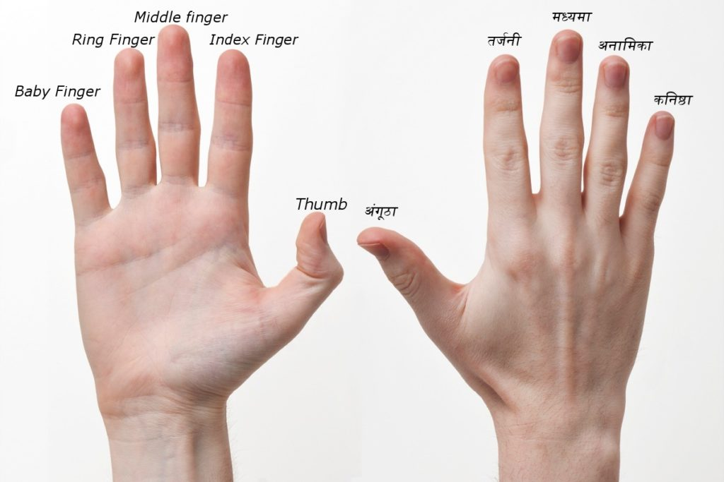 Fingers Name in Hindi